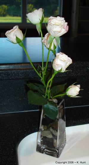 Kitchen_roses_1