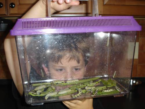 Youngest_holding_caterpillars